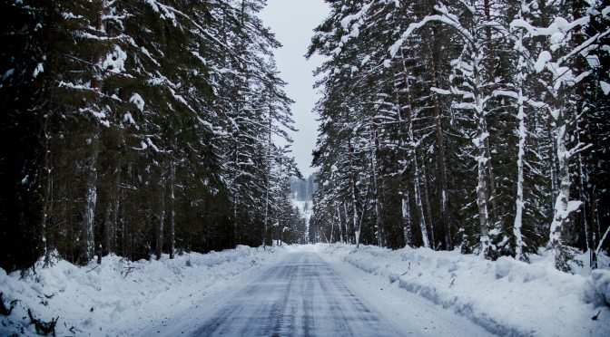 snowy road between two trees